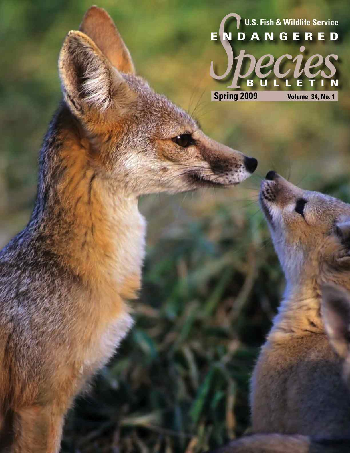 Cover of Endangered Species Bulletin